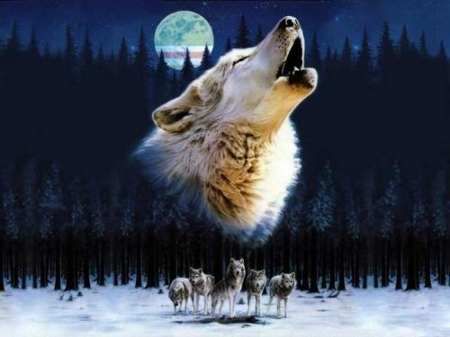 волк флаг